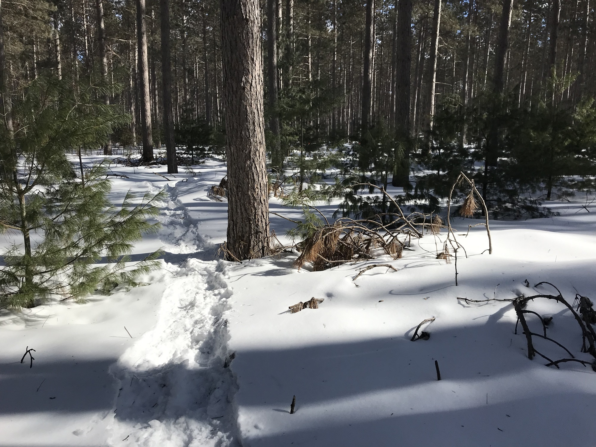 County Forest Winter 1.JPG