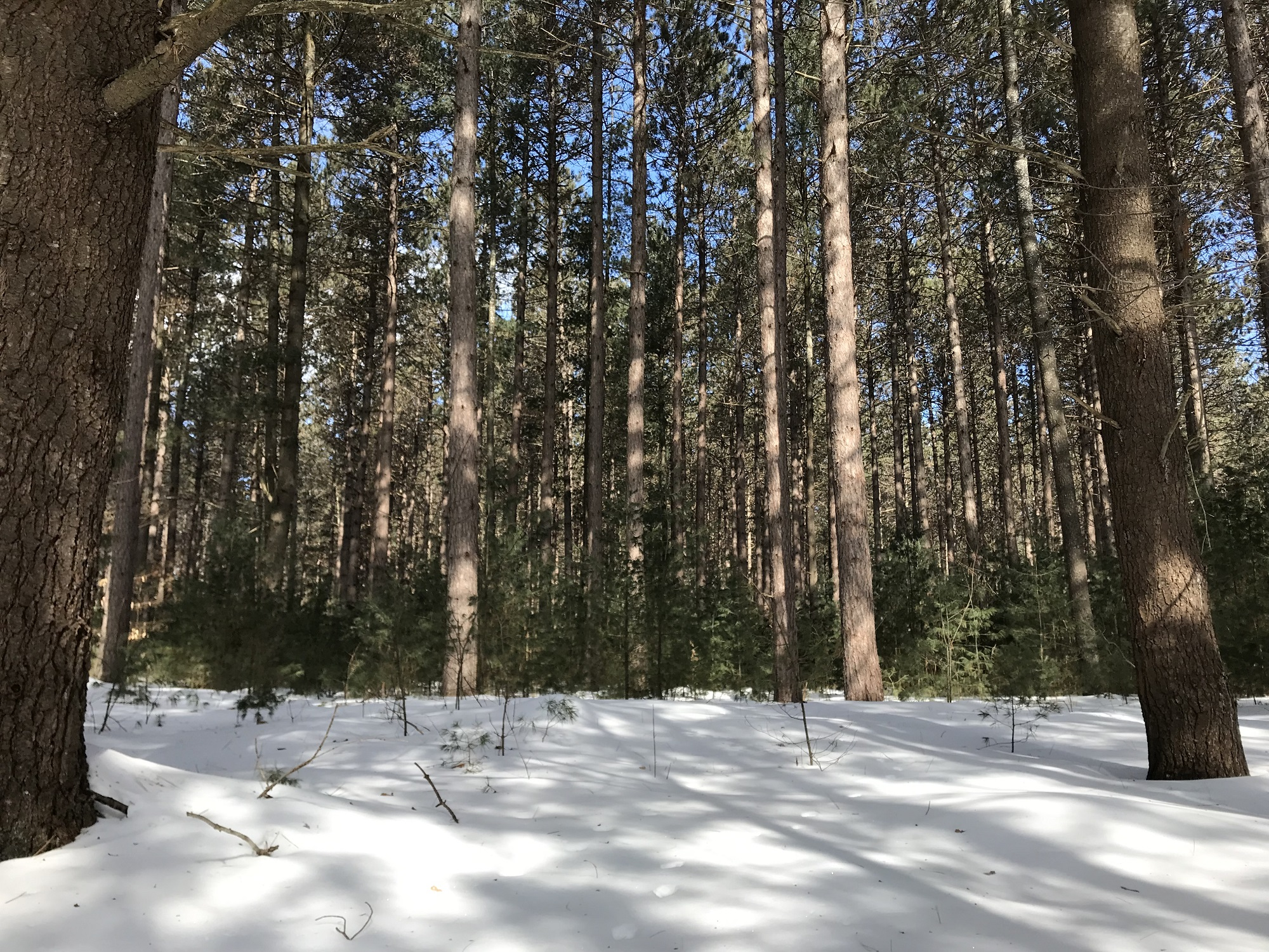 County Forest Winter 4.JPG