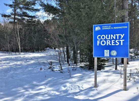 County Forest Sign