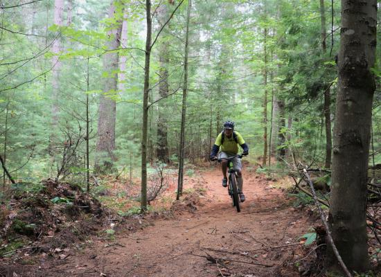 Mountain Biker on the County Forest Trail